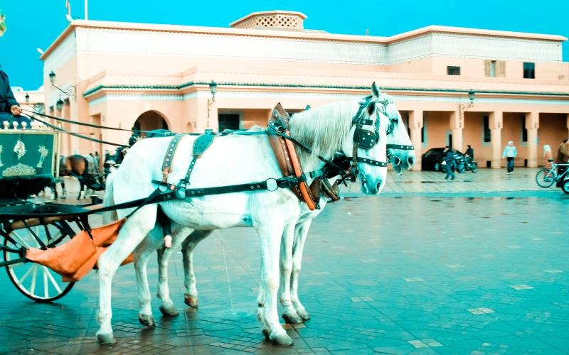 Marrakech1-29
